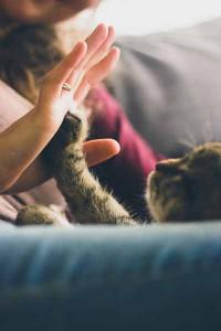 cat_comfot