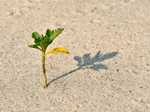 plant sprouting in sand